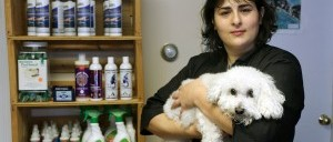 dog pet grooming