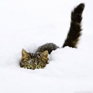 cat-snow-300x300