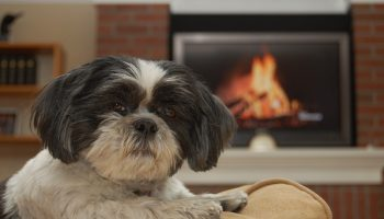 Pet-Safe Household Cleaning Products