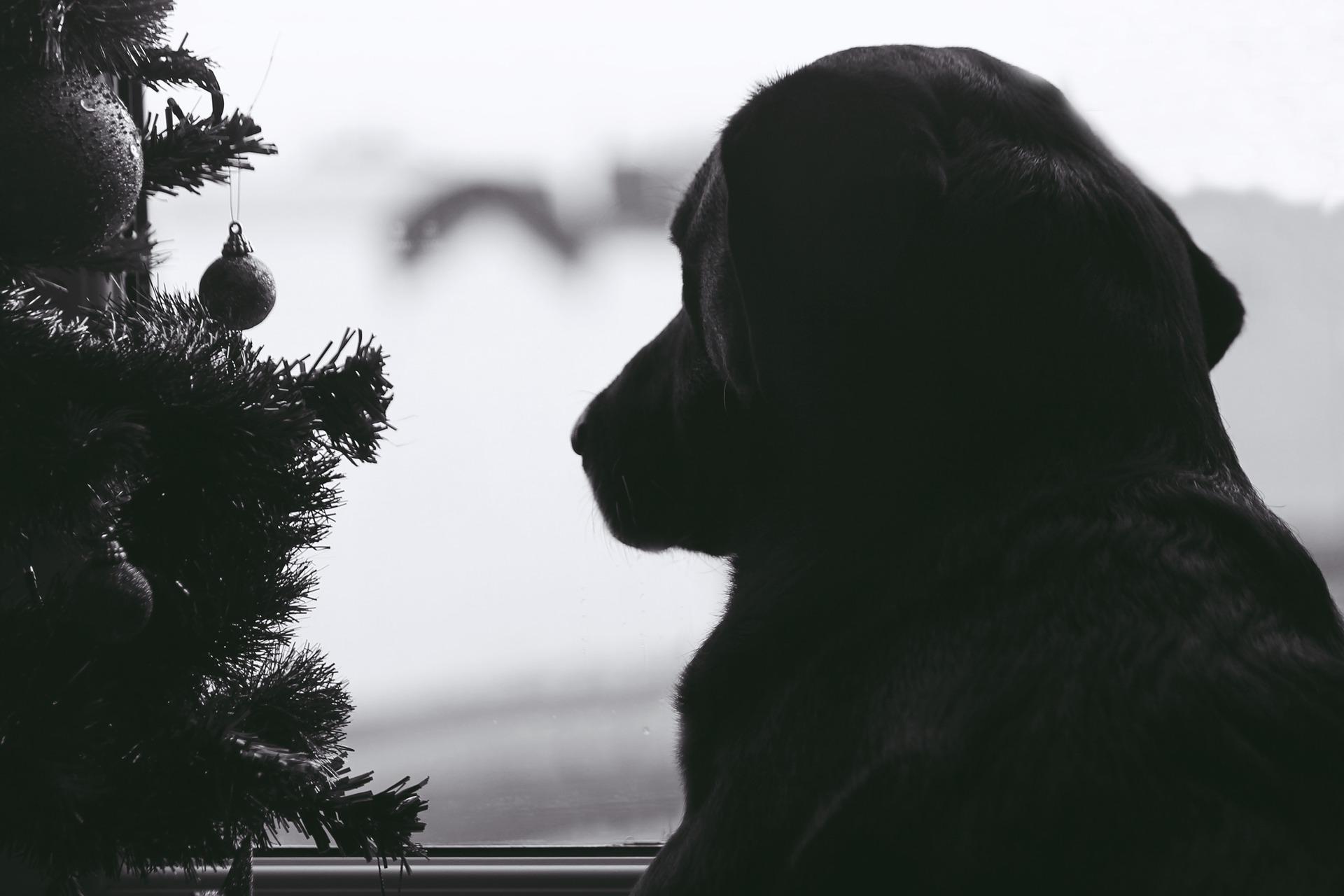 dog-1115700_1920
