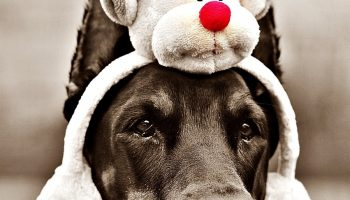 Holiday Safety Tips for Your Furry Friend