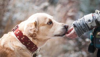 Domestication of Dogs