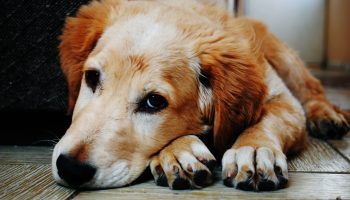 How a Dog's Paws Can Indicate Their Health