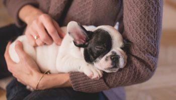 Common Puppy Behaviors
