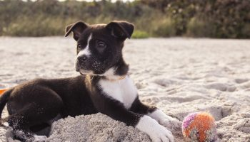 Pet Items You Never Thought To Bring On Vacation