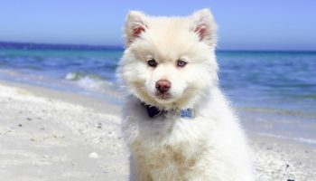 Tips For Keeping Your Pet Cool in Summer