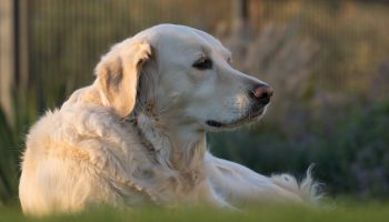 Knowing Your Dog's Age