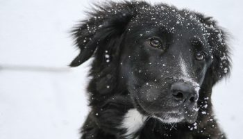 Dogs and Winter