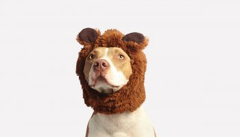 Crazy Cute Dog Costumes